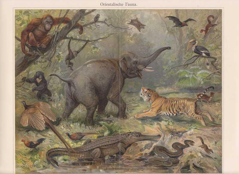 Gibbon Partnervermittlung spart